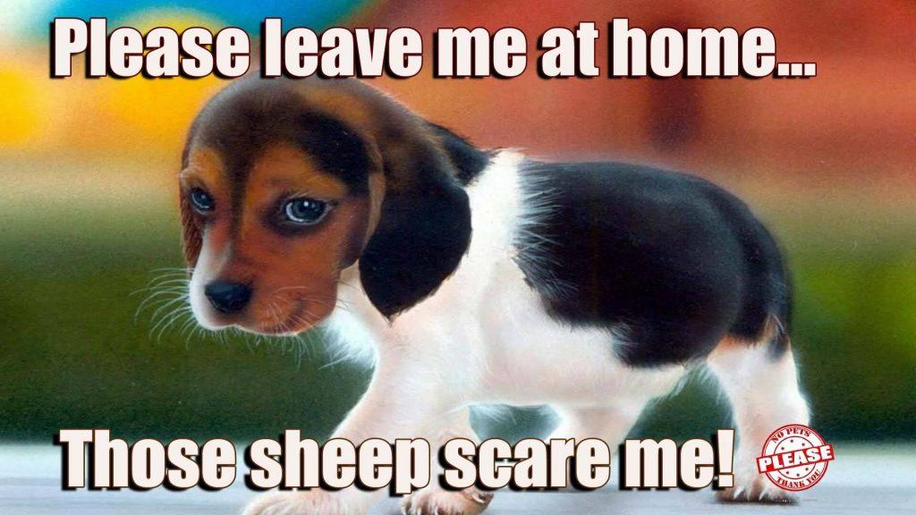 no-pets-cute-puppy