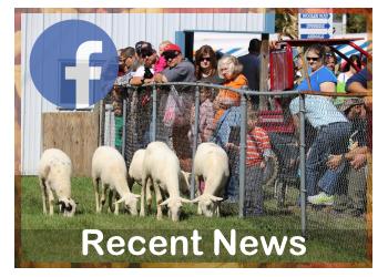 Wool Festival |